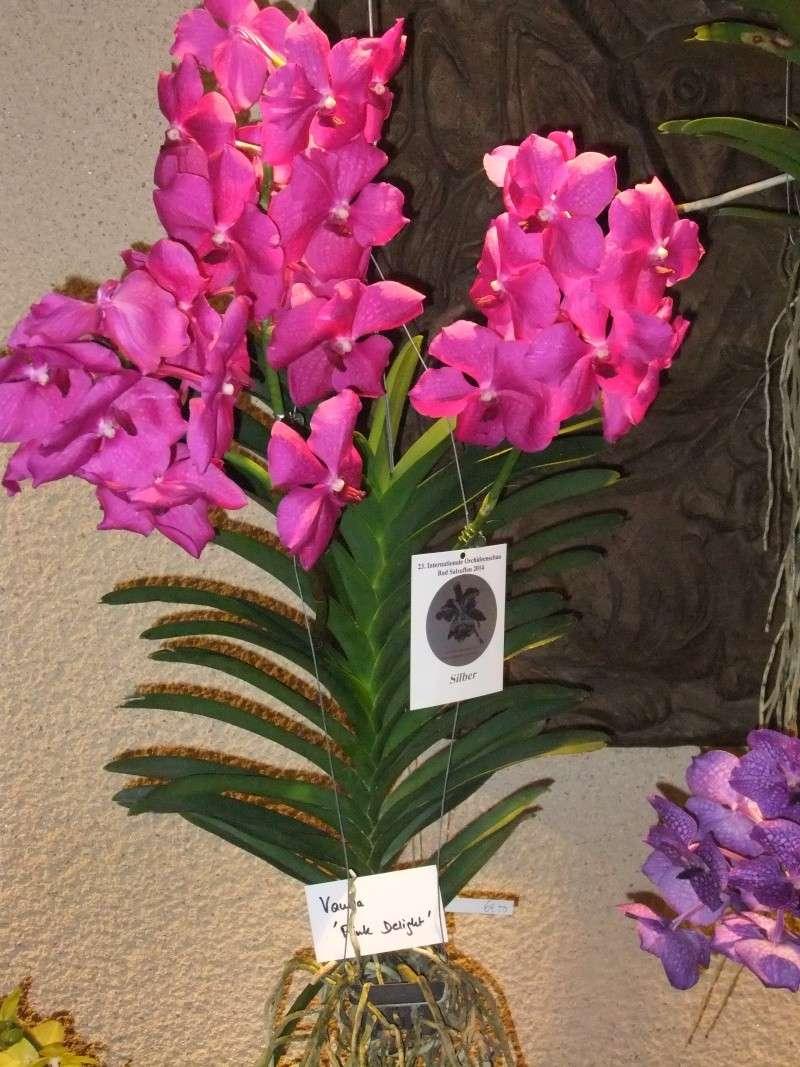 Orchideen-Ausstellungen aus aller Welt Dscf9059