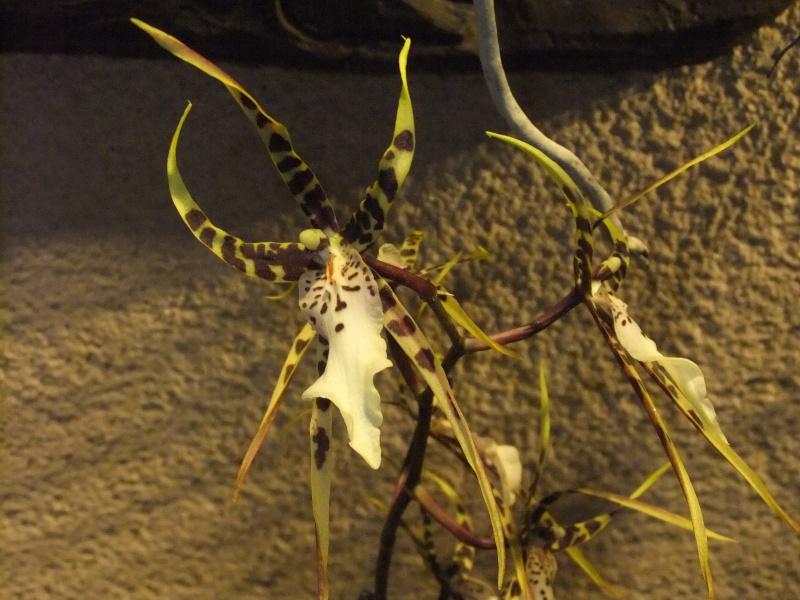 Orchideen-Ausstellungen aus aller Welt Dscf9060