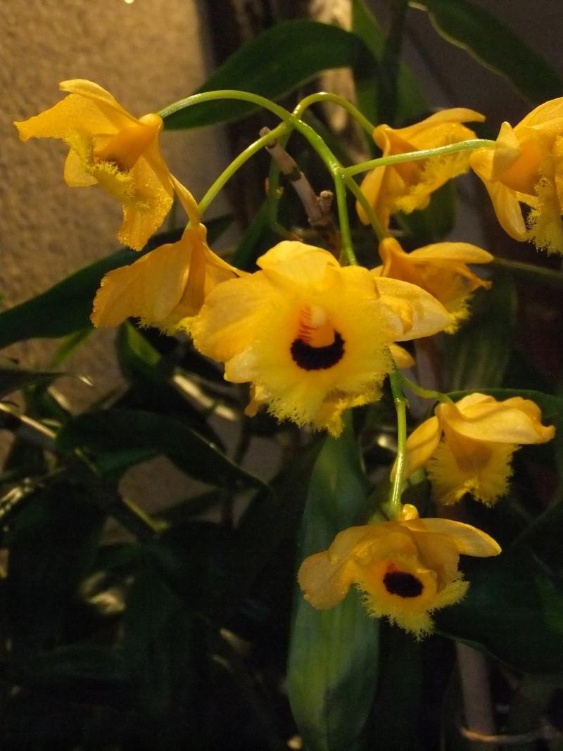 Orchideen-Ausstellungen aus aller Welt Dscf9061