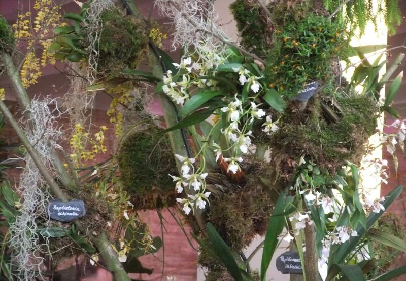 Orchideen-Ausstellungen aus aller Welt Dscf9064