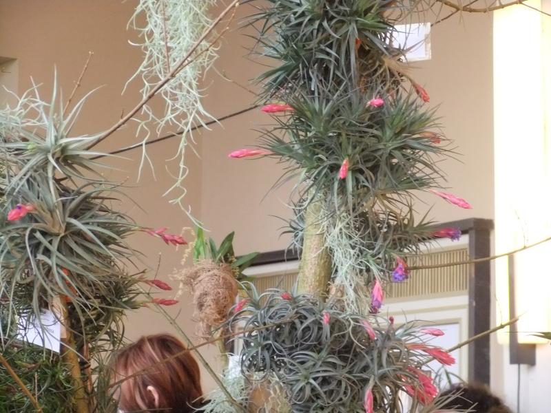 Orchideen-Ausstellungen aus aller Welt Dscf9121