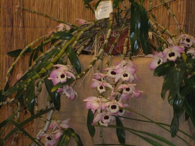Orchideen-Ausstellungen aus aller Welt Dscf9125