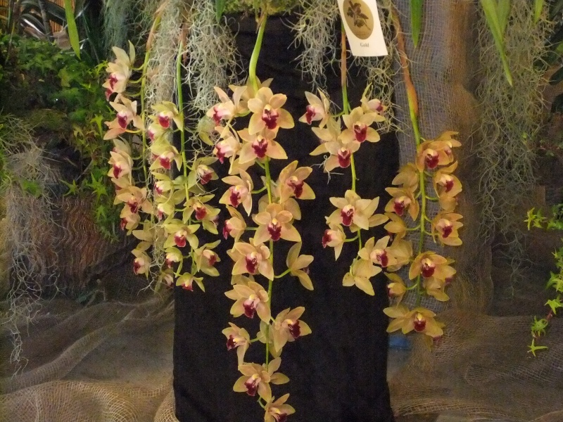 Orchideen-Ausstellungen aus aller Welt Dscf9126