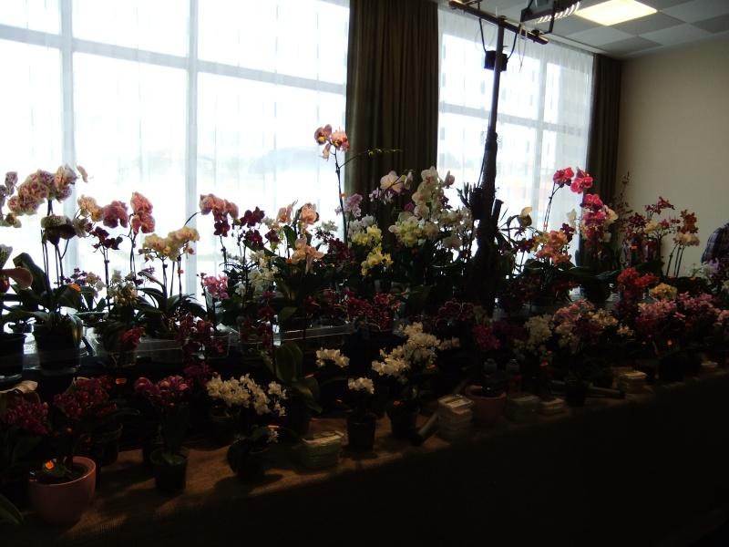 Orchideen-Ausstellungen aus aller Welt - Seite 2 Dscf9127