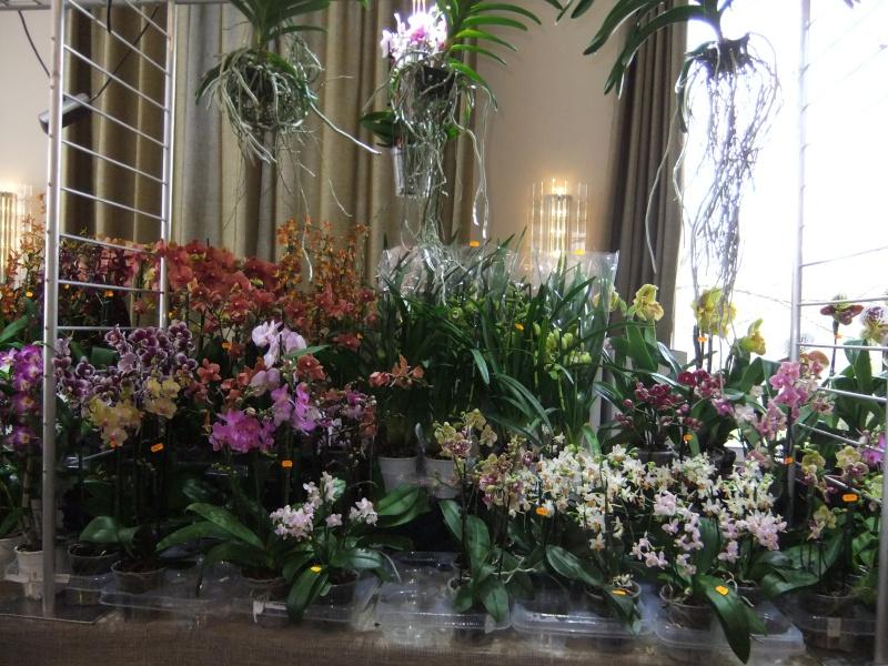 Orchideen-Ausstellungen aus aller Welt - Seite 2 Dscf9130