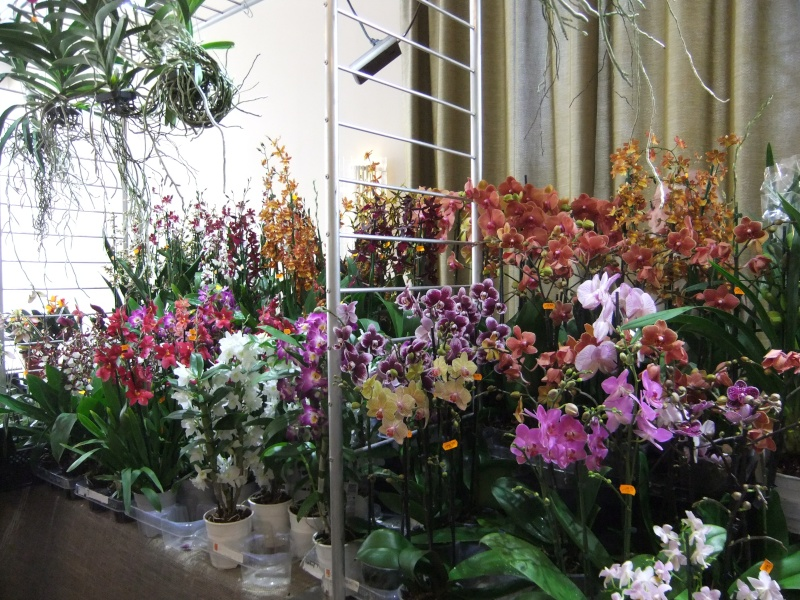 Orchideen-Ausstellungen aus aller Welt - Seite 2 Dscf9131