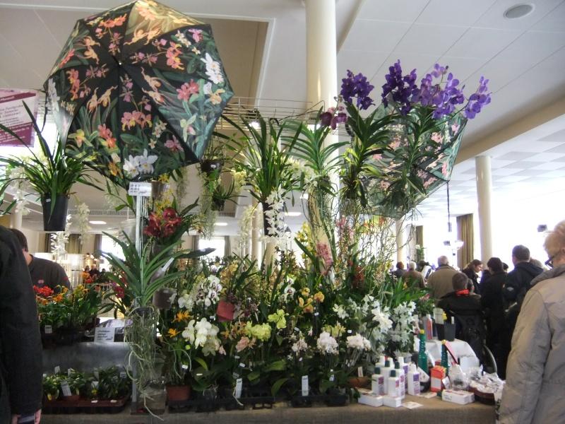 Orchideen-Ausstellungen aus aller Welt - Seite 2 Dscf9132