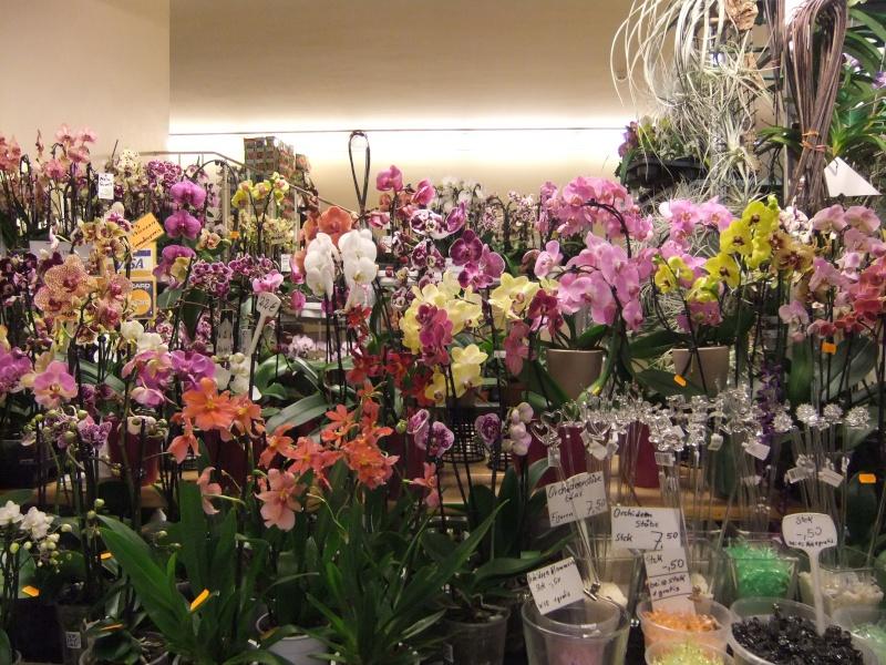 Orchideen-Ausstellungen aus aller Welt - Seite 2 Dscf9133