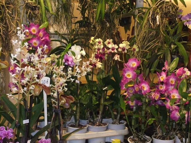 Orchideen-Ausstellungen aus aller Welt - Seite 2 Dscf9134
