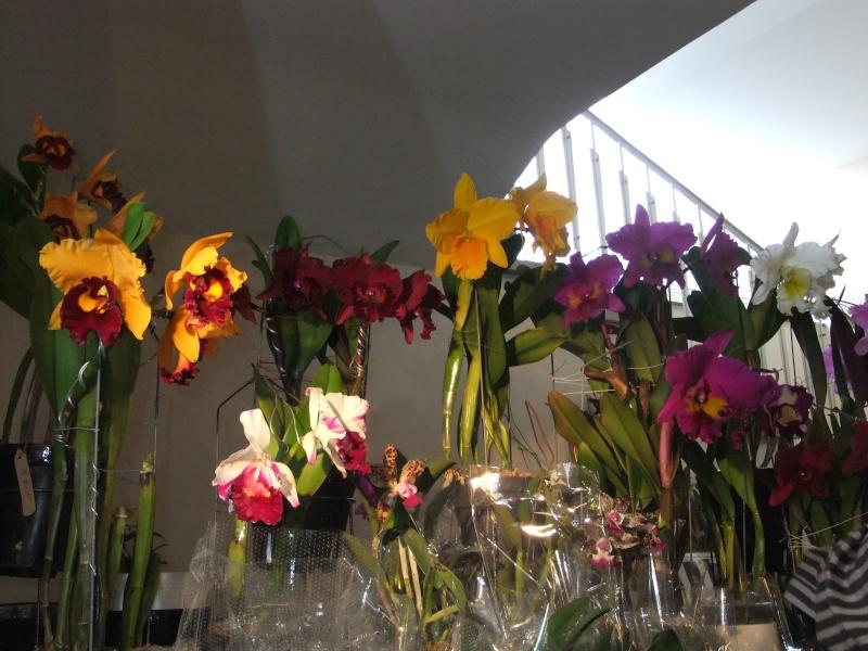 Orchideen-Ausstellungen aus aller Welt - Seite 2 Dscf9137