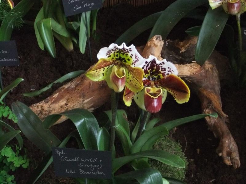 Orchideen-Ausstellungen aus aller Welt Dscf9139