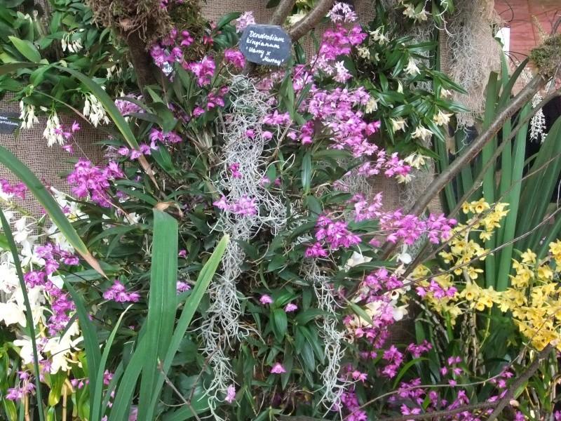 Orchideen-Ausstellungen aus aller Welt - Seite 2 Dscf9141