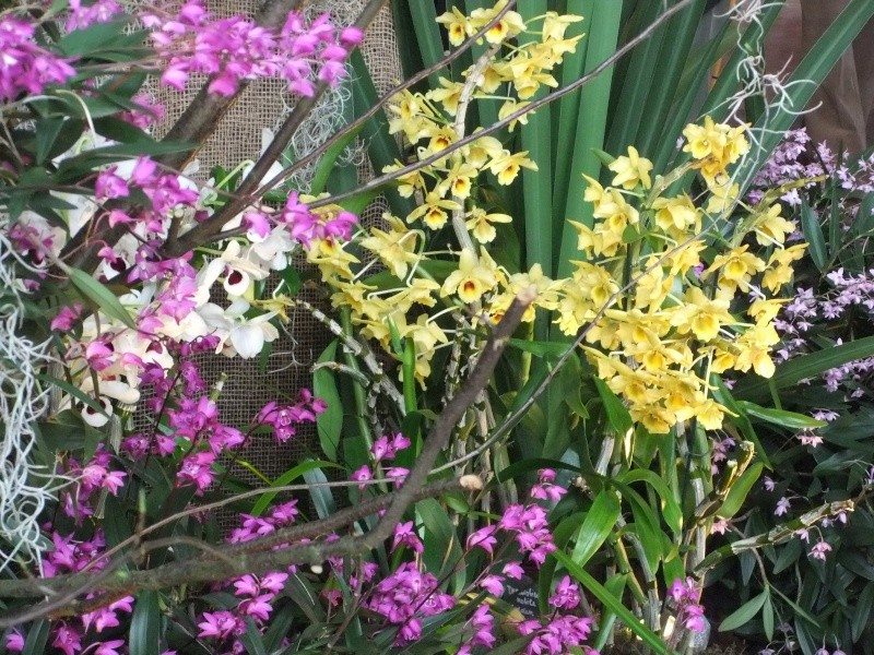 Orchideen-Ausstellungen aus aller Welt - Seite 2 Dscf9143