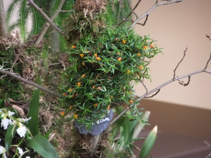 Orchideen-Ausstellungen aus aller Welt - Seite 2 Dscf9145