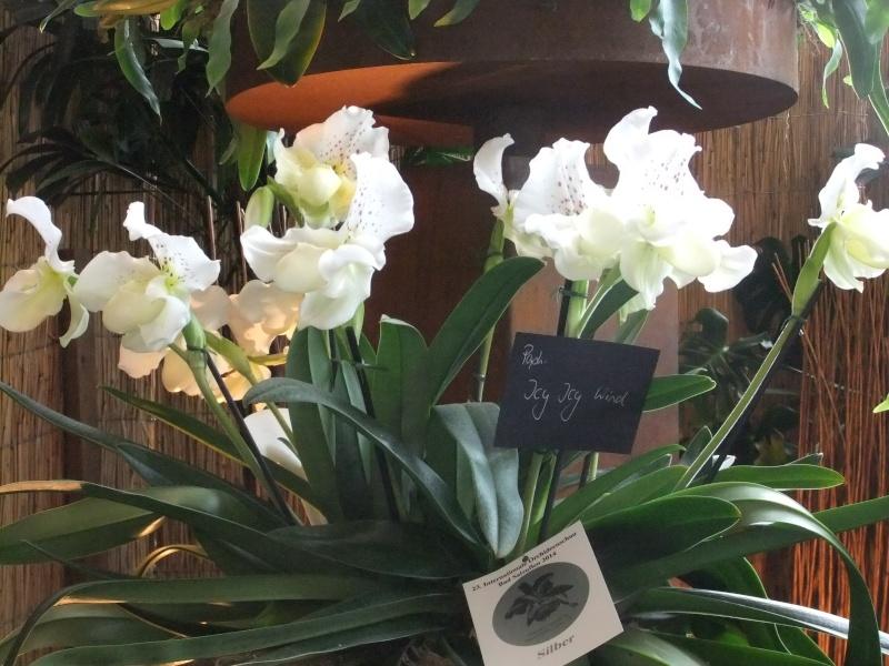 Orchideen-Ausstellungen aus aller Welt - Seite 2 Dscf9146