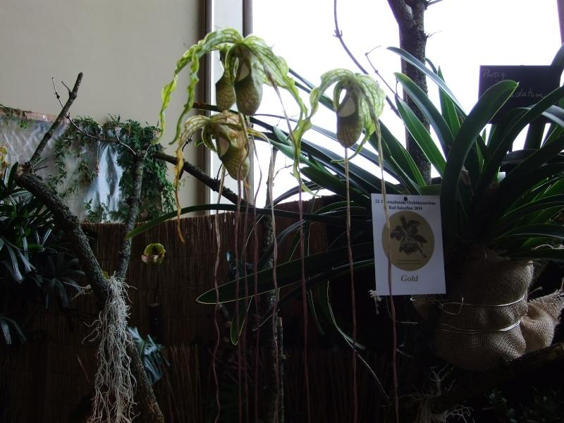 Orchideen-Ausstellungen aus aller Welt - Seite 2 Dscf9147