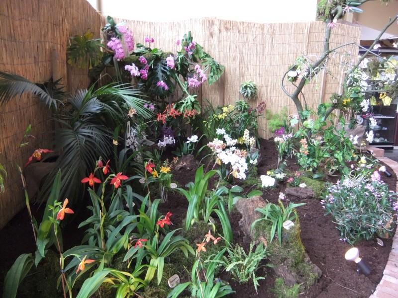 Orchideen-Ausstellungen aus aller Welt - Seite 2 Dscf9148