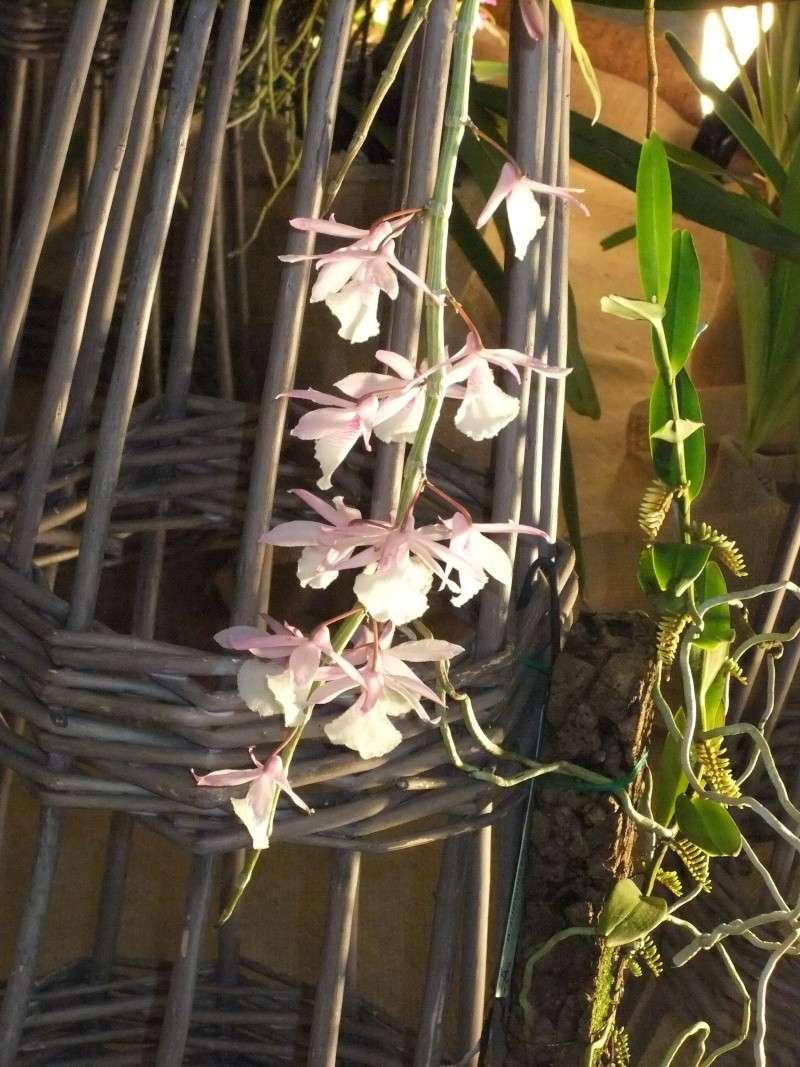 Orchideen-Ausstellungen aus aller Welt - Seite 2 Dscf9149