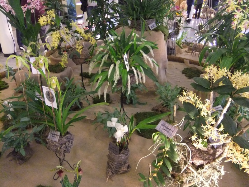 Orchideen-Ausstellungen aus aller Welt - Seite 2 Dscf9150