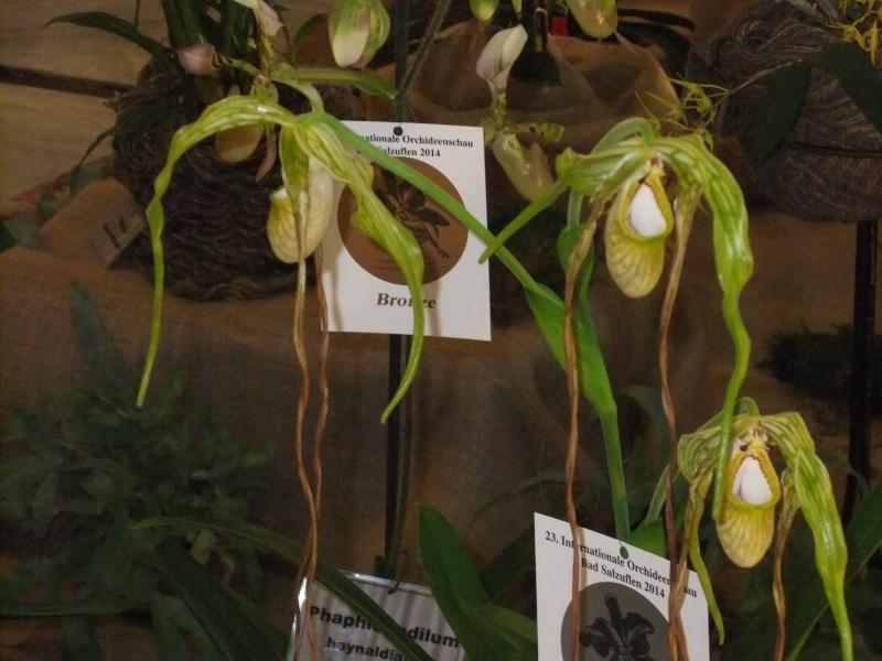 Orchideen-Ausstellungen aus aller Welt - Seite 2 Dscf9151