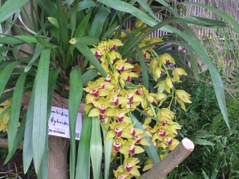 Orchideen-Ausstellungen aus aller Welt - Seite 2 Dscf9154