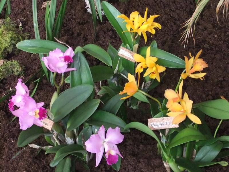 Orchideen-Ausstellungen aus aller Welt - Seite 2 Dscf9156
