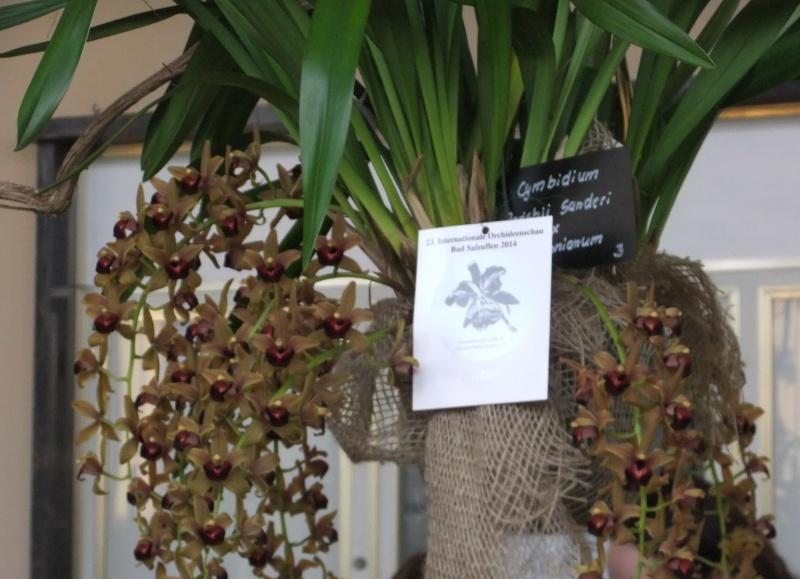 Orchideen-Ausstellungen aus aller Welt - Seite 2 Dscf9157
