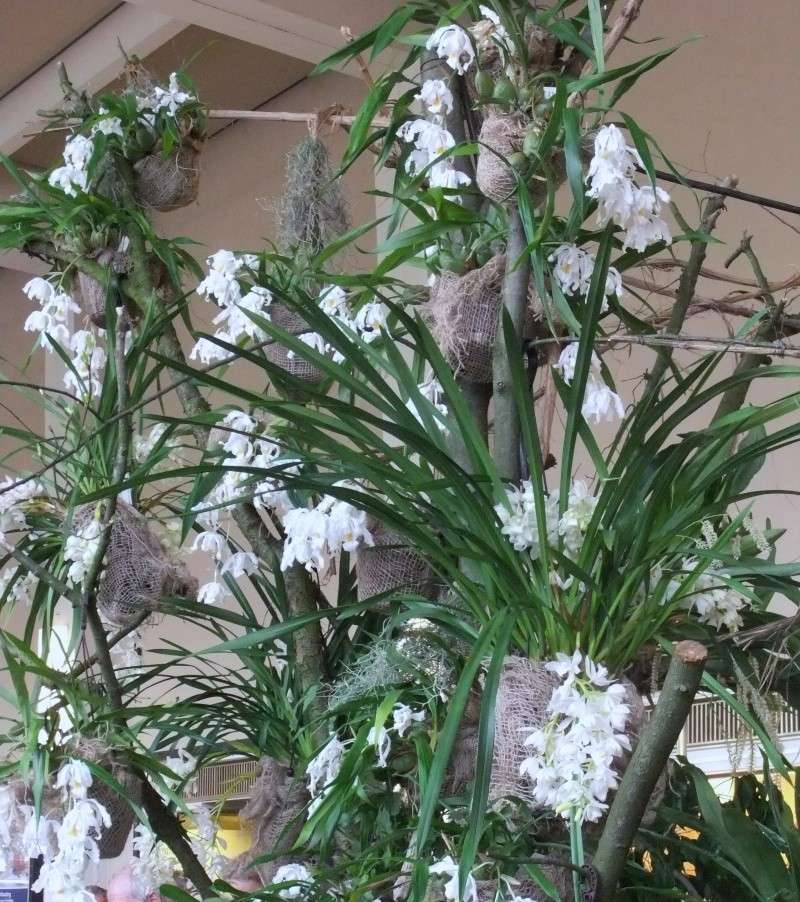 Orchideen-Ausstellungen aus aller Welt - Seite 2 Dscf9158