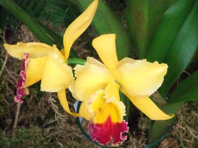 Orchideen-Ausstellungen aus aller Welt - Seite 2 Dscf9160