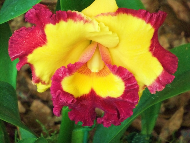 Orchideen-Ausstellungen aus aller Welt - Seite 2 Dscf9161