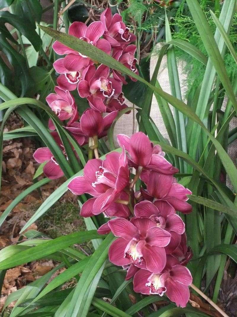 Orchideen-Ausstellungen aus aller Welt - Seite 2 Dscf9164