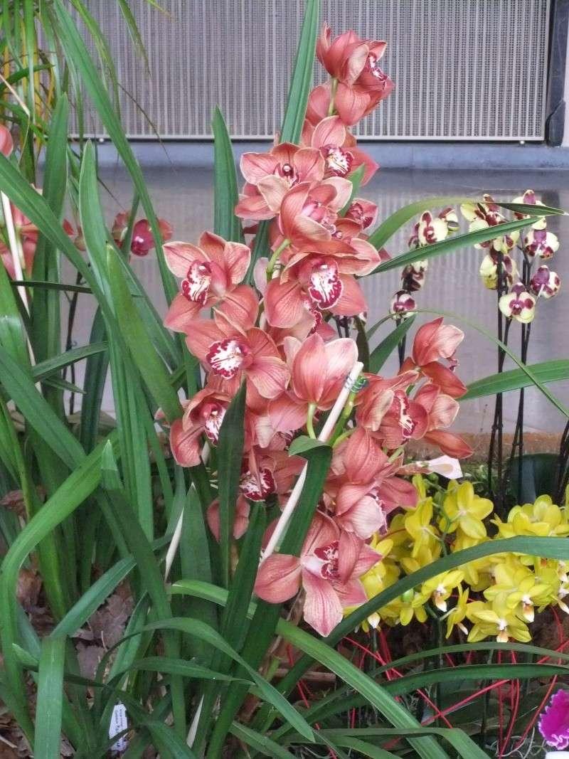Orchideen-Ausstellungen aus aller Welt - Seite 2 Dscf9165