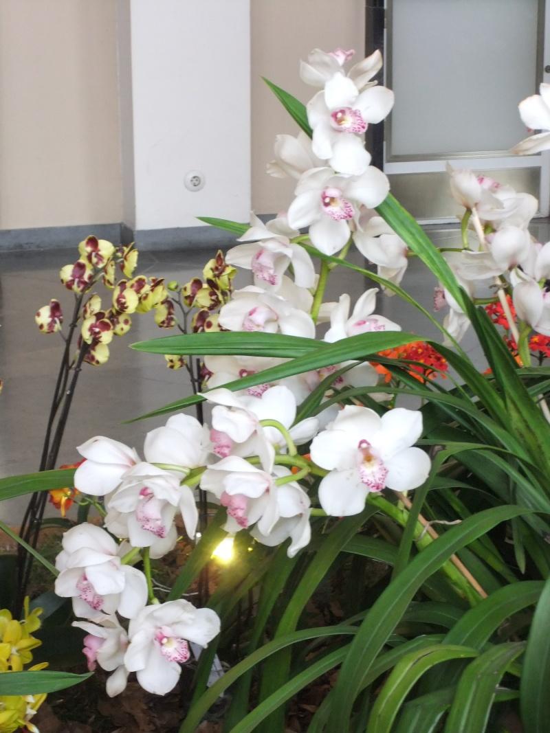 Orchideen-Ausstellungen aus aller Welt - Seite 2 Dscf9166