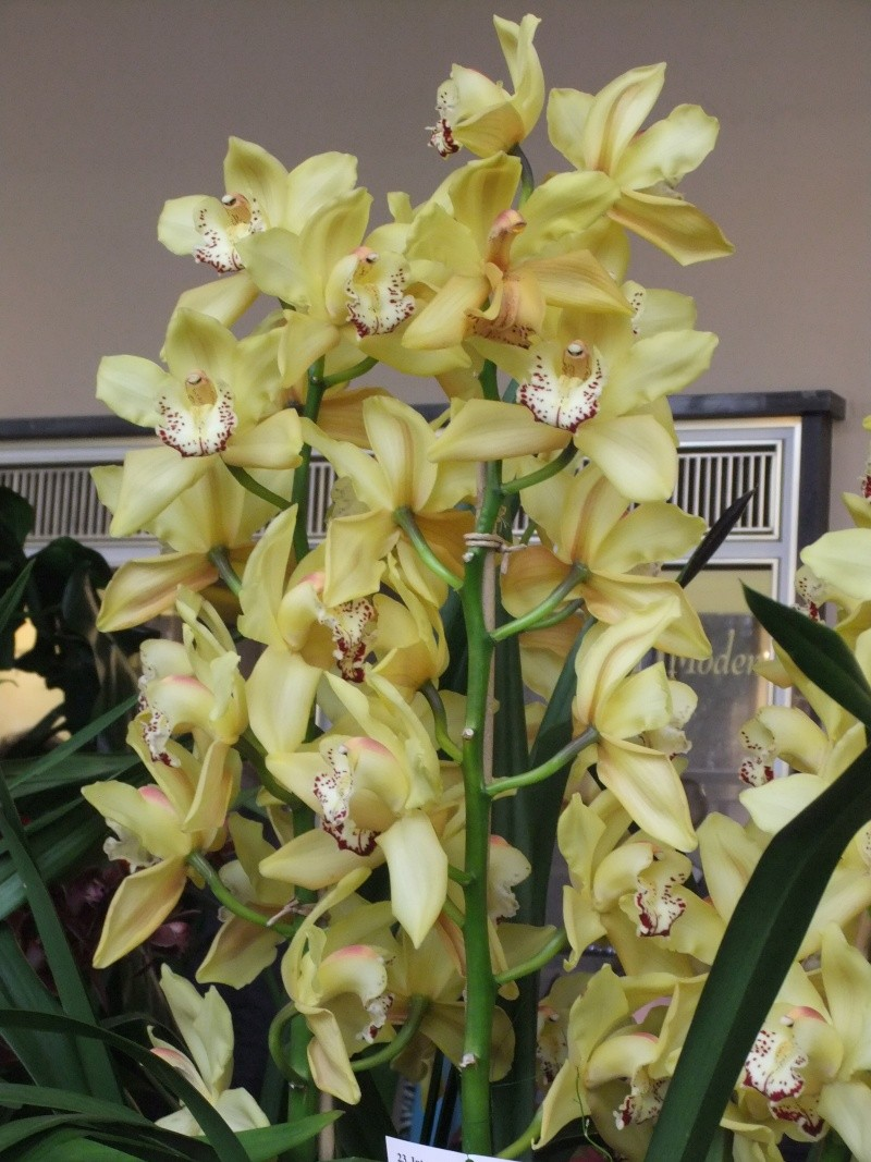 Orchideen-Ausstellungen aus aller Welt - Seite 2 Dscf9167