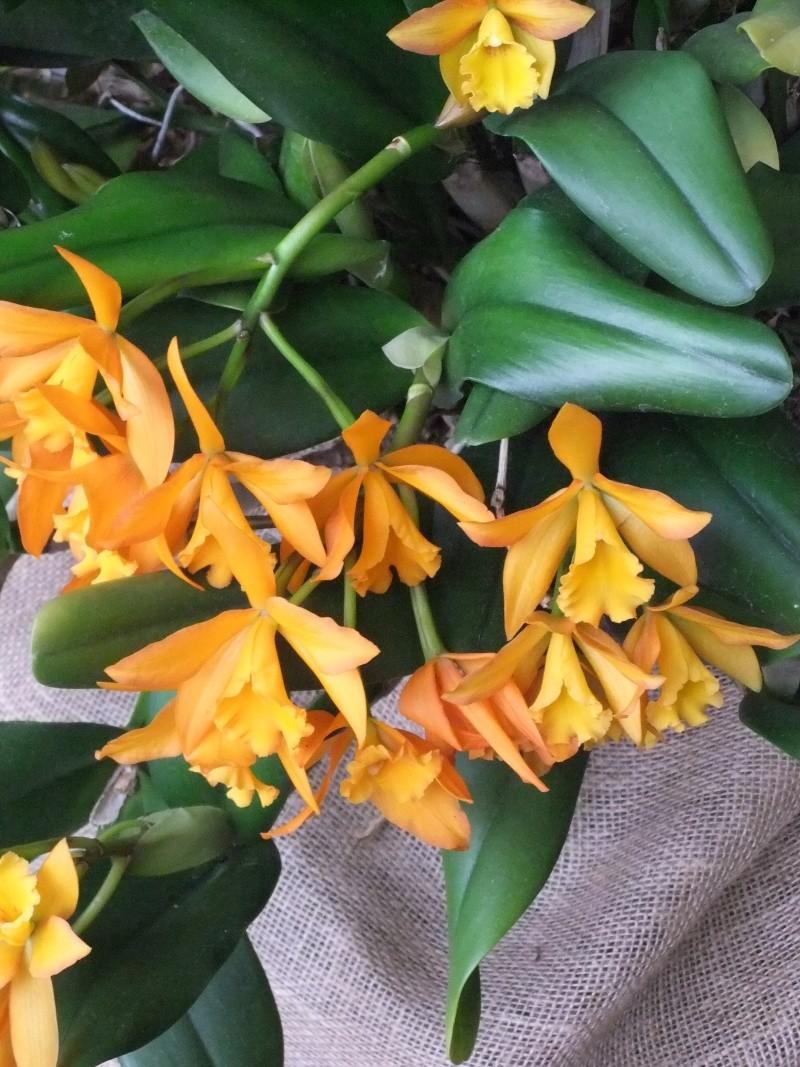 Orchideen-Ausstellungen aus aller Welt - Seite 2 Dscf9168