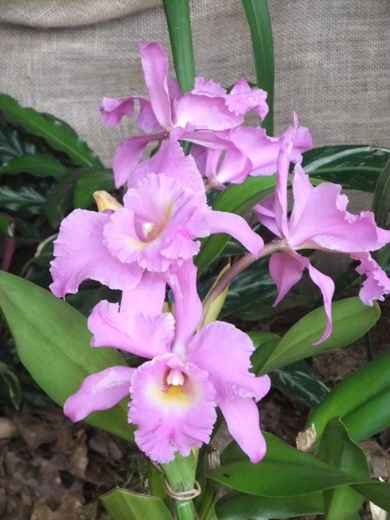 Orchideen-Ausstellungen aus aller Welt - Seite 2 Dscf9171