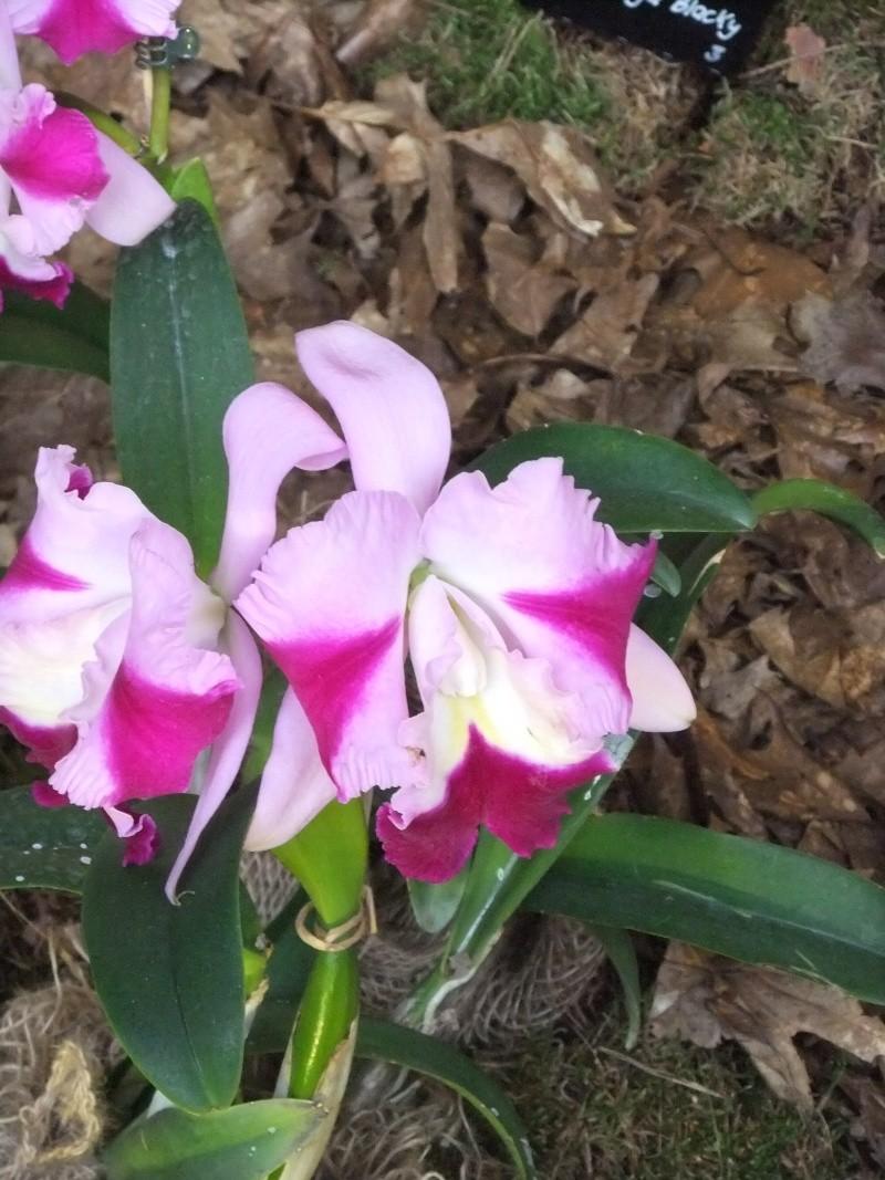 Orchideen-Ausstellungen aus aller Welt - Seite 2 Dscf9172