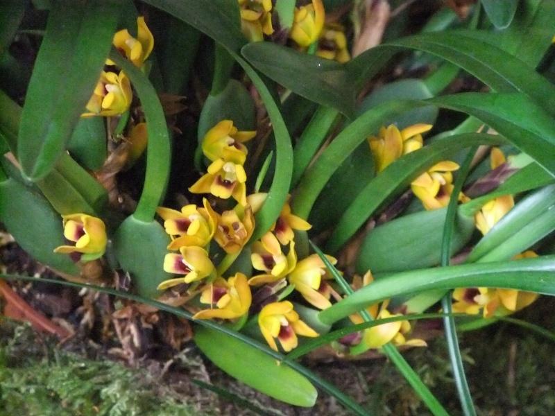 Orchideen-Ausstellungen aus aller Welt - Seite 2 Dscf9175
