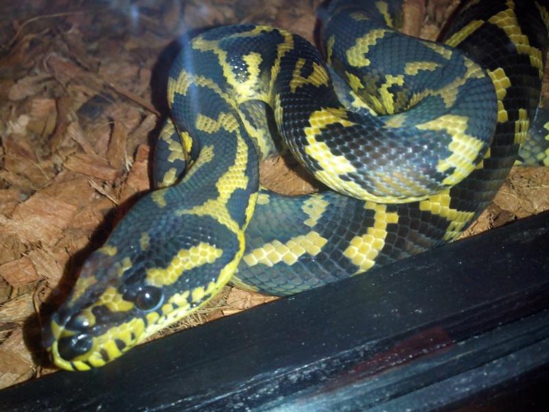 PHOTOS DE MON COUPLE IJ Python11