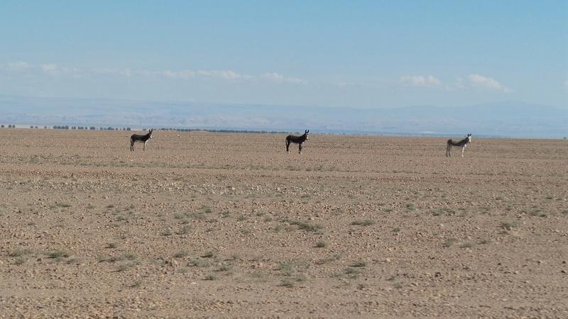 Le 16.03.2017 San Pedro d'Atacama.(par pat) 20170408