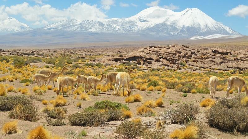 Le 16.03.2017 San Pedro d'Atacama.(par pat) 20170415
