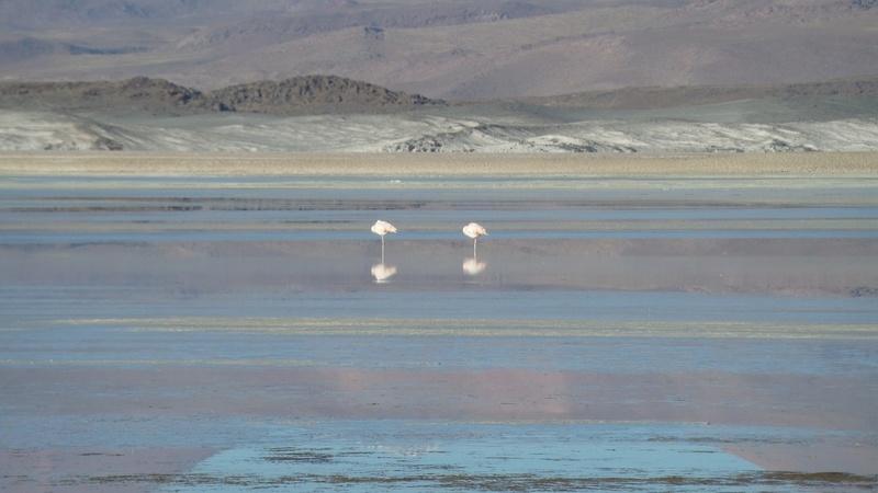 Le 16.03.2017 San Pedro d'Atacama.(par pat) 20170423