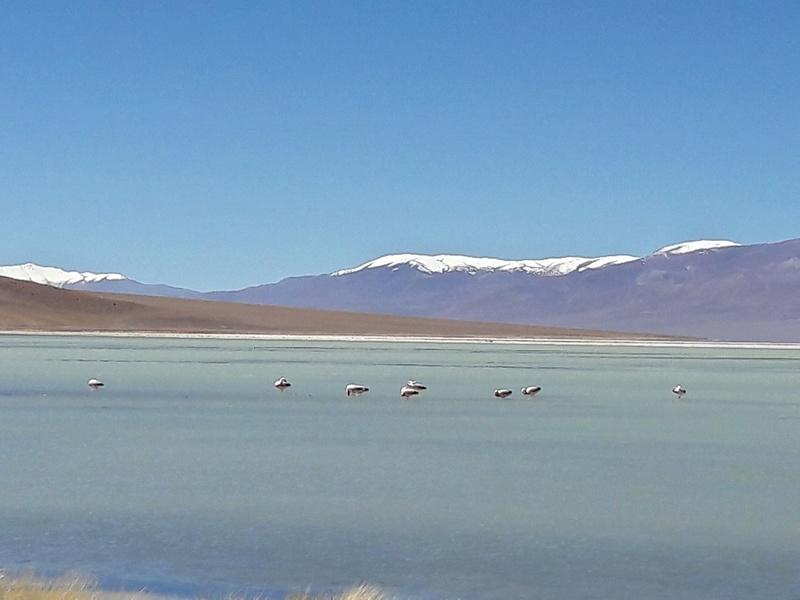 Le 16.03.2017 San Pedro d'Atacama.(par pat) 20170440