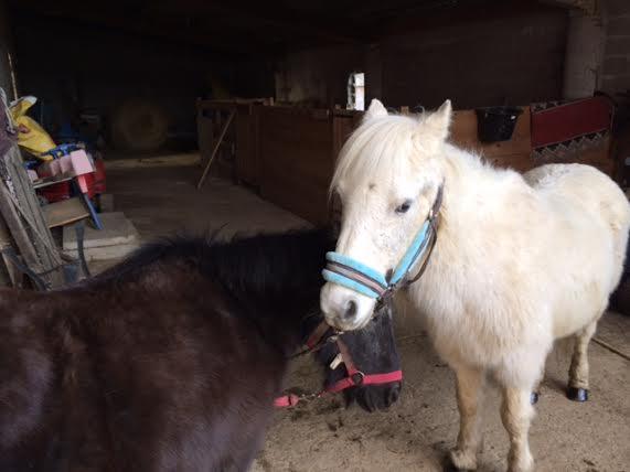 KIWI et CAPUCINE (décédée) - ONC poney présumées nées en 1990 - adoptées en octobre 2008 par caro38 - Page 2 136