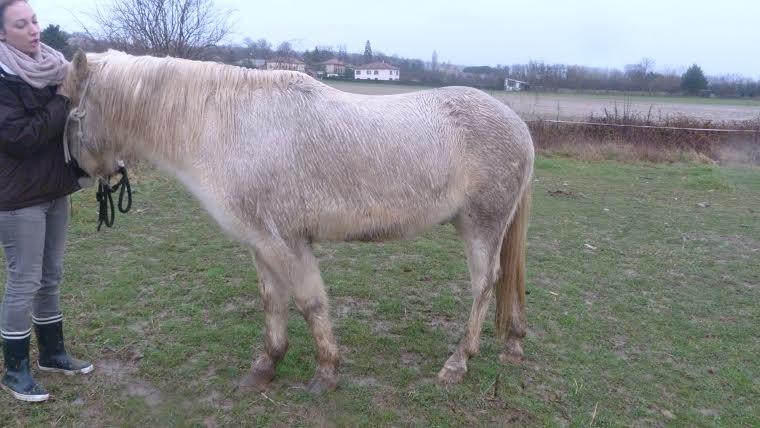 OSCO - Camargue PP né en 2002 - Adopté en mars 2012 par Anaïs  619