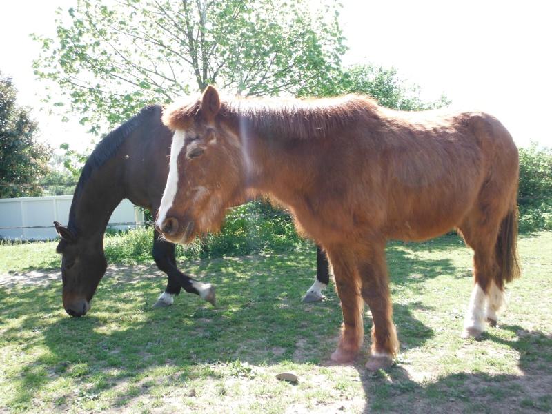 BANQUISE - ONC poney présumée née en 1984 - adoptée en novembre 2009 par Istorienne  Dscf2530