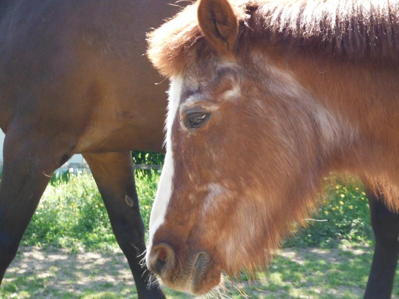 BANQUISE - ONC poney présumée née en 1984 - adoptée en novembre 2009 par Istorienne  Dscf2531
