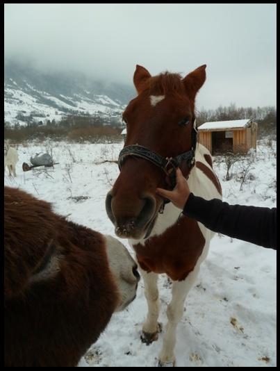 CALINOU  - ONC poney - né en 1999 - adopté en novembre 2012 par Stéphanie - Page 6 Photo113