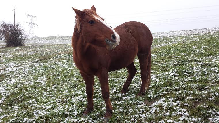 ROXANE - OI Poney née en 2000 - adoptée en décembre 2011 par Martine  Roxane21