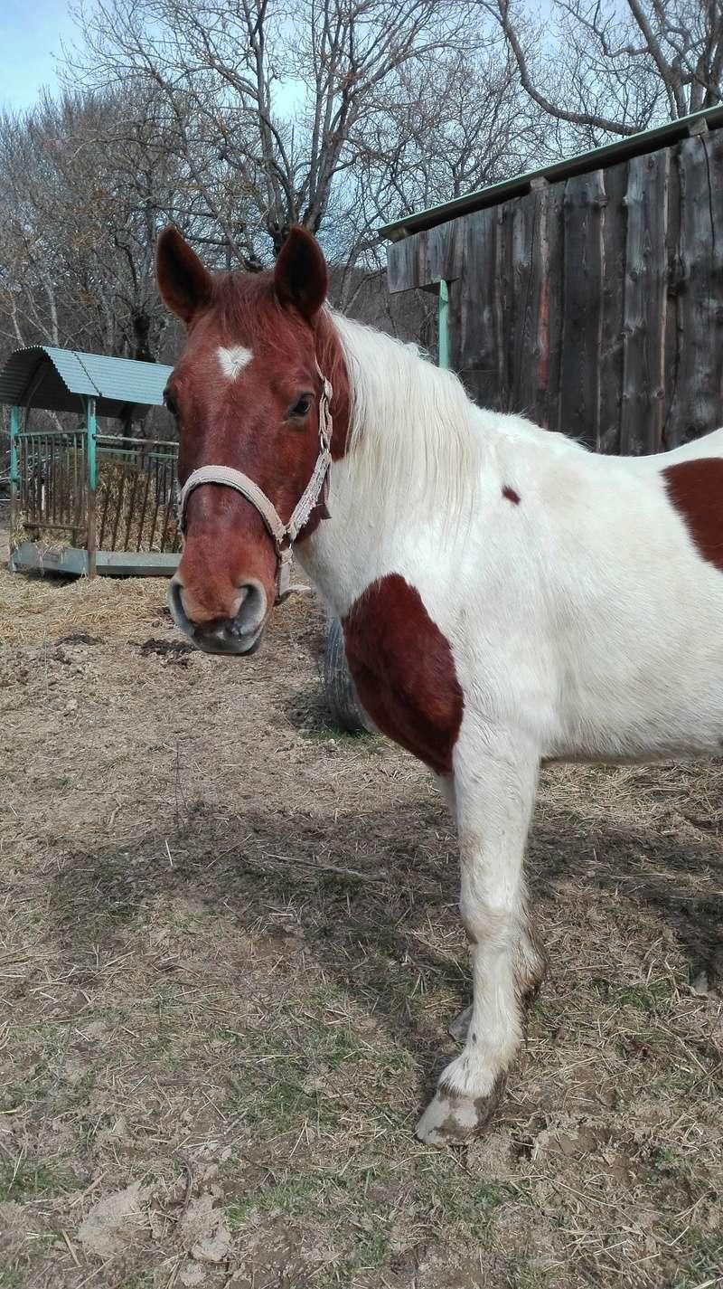 CALINOU  - ONC poney - né en 1999 - adopté en novembre 2012 par Stéphanie - Page 6 Supp311